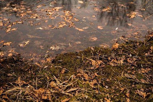 Pond, Moss, Water, Nature, Lake, Mirroring
