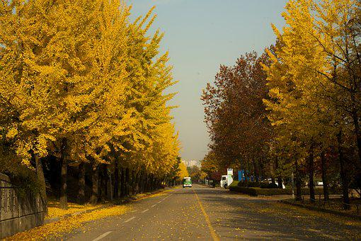 Hanam City, Autumn, Landscape