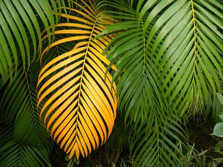 Leaf, Multiplying, Tropical