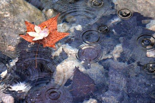 Maple, Autumn, Leaves, Leaf, Autumnal, Seasonal