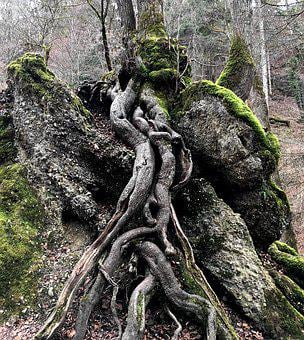 Tree, Root, Nature, Log, Green, Contour, Rooted, Tribe
