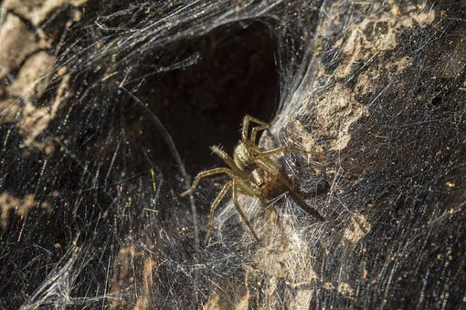 Spider Web, Spider, Insect, Lighting, Nora, Hole