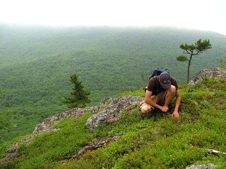 Hiking, Mountains, Nature, Picking Blueberries, People