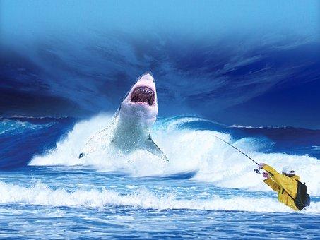 Shark, Sea, Ocean, Blue, Predator, Fishing, Fisherman