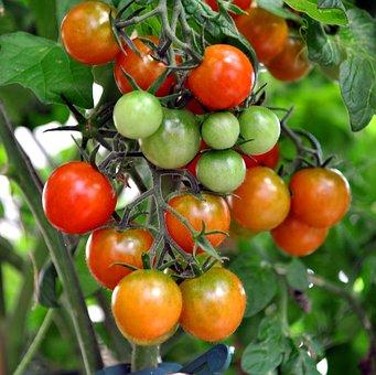 Tomato Shrub, Coctailtomate, Red, Green, Vegetables