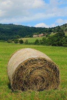 Nature, Hay, Pre, Harvest, Roller, Farmer, Straw