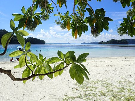 White Beach, Bay, Shade, Green Leaf