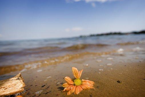 Lake Victoria, Uganda, Africa, Sand, Flower, Wilted
