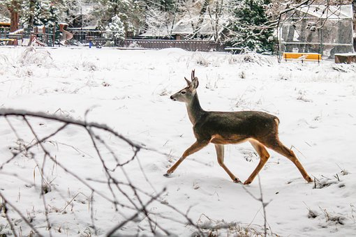Deer, Winter, Christmas, Nature, Forest, Santa, Set