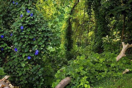 Jungle, Uganda, Green, Rainforest, Fauna, Natural