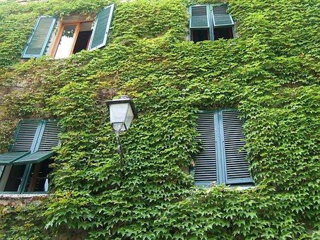 Windows, Tuscany, Green, Leaf, Ivy, Nature, Wall, Light