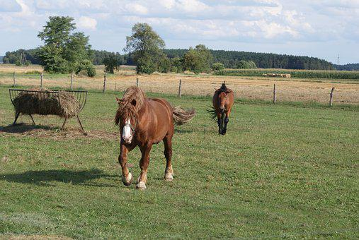 Poland Village, Horses, Fodder, The Horse, Animal