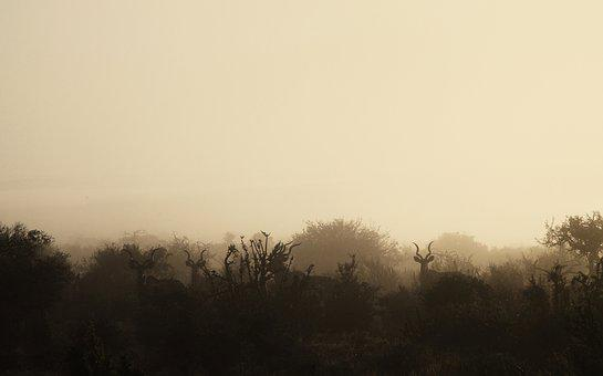 Morning, Mist, Wildlife, Wild, Game, Animals, Kudu
