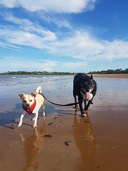 Beach, Dogs, Sunny, Summer, Pet, Animal, Sand, Sea, Fun