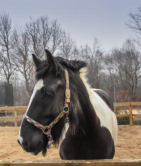 Horse, Farm, Nature, Animal, Ranch, Domestic, Stallion