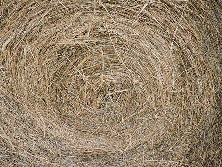 Hay Bale, Farm, Closeup, Round, Bale, Feed, Agriculture