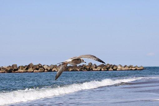 Animal, Sea, Beach, Wave, Sea Gull, Seagull, Young Bird