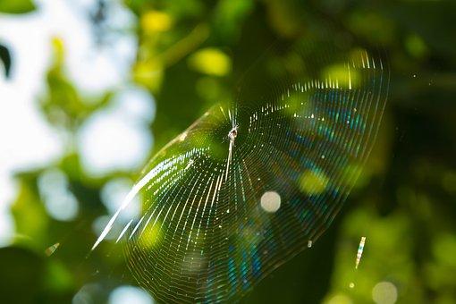 Spider, Web, Spider Web, Garden, Lemons, Arachnid, Fear