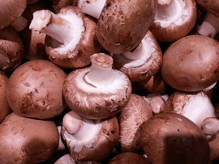 Champion, Brown, Mushrooms, Mushroom, Cute, Autumn