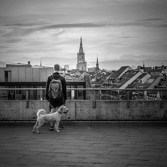 Dog, Bern, View, Man, White Dog, Leash, Walk, Morning
