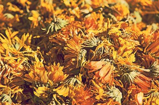 Dandelion, Flower, Dried, Plant, Yellow, Nature
