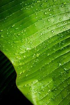 Rocio, Green, Leaf, Plants, Green Leaves, Rib, Garden