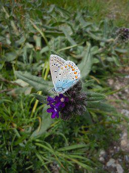 Flower, Grass, Butterfly, Purple, Insect, Close