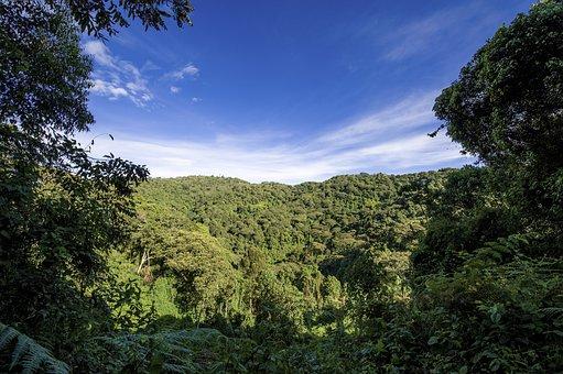 Uganda, Jungle, Forest, Hill, Travel, Park, Wild