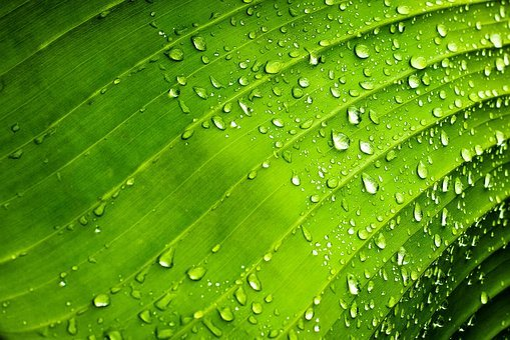 Drops, Rib, Green, Leaf, Nature, Water, Rocio, Plants