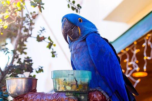 Parrot, Animal, Bird, Nature, Wild, Wildlife, Zoo