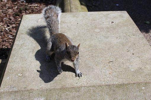 Squirrel, Outdoors, Animal, Nature, Wildlife, Tail
