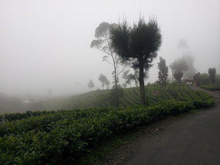 The Mist, Tea Estate, Forest, Haputhale, Haputale