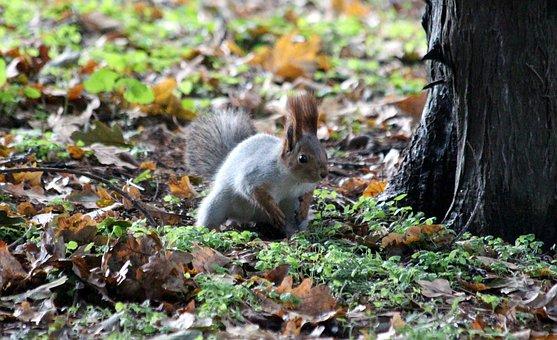 Squirrel, Protein-hlopotun'ja, View, Alertness, Curious