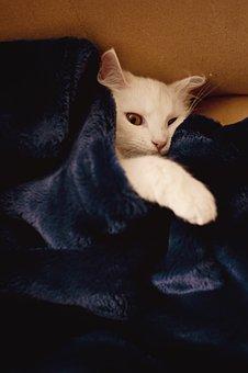 Cat, Blanket, White, Cute, Pet, Animal, Fluffy, Fur