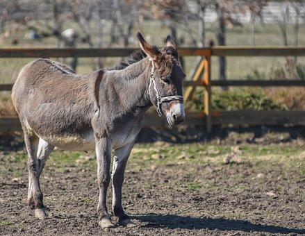 Dunkey In Farm, Farm, Ranch, Animals, Dunkey, Wild, Pet