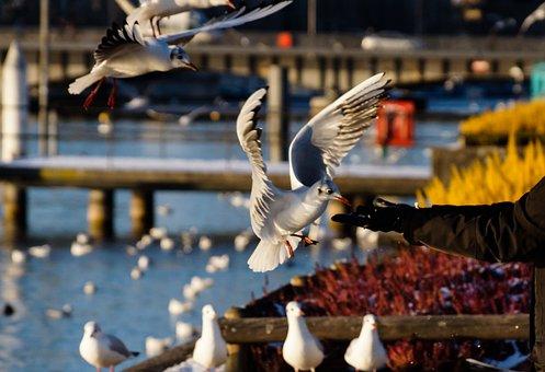 Birds, Food, Feeding, Hand, Hand Fed, Trust, Flight