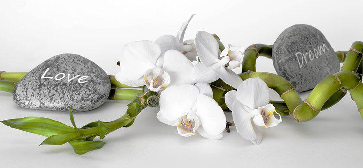 Orchid, Orchid Flower, Bamboo, Luck Bamboo, Relaxation