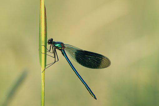 Dragonfly, Insect, Wing, Close Up, Nature, Macro