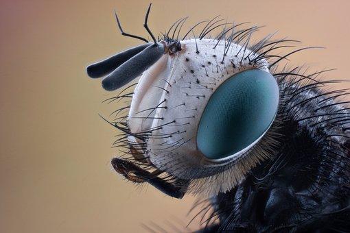 Macro, Insect, Nature, Animal, Bug, Black, Natural