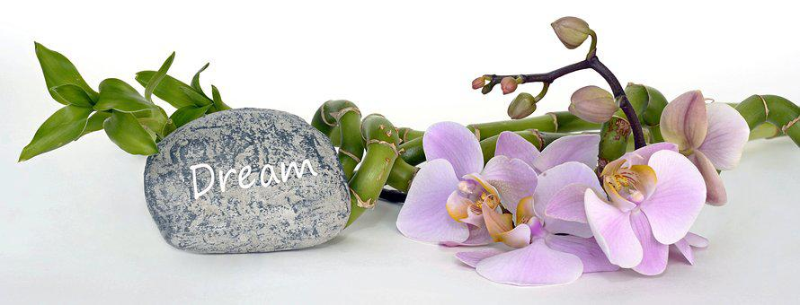 Orchid, Orchid Flower, Bamboo, Luck Bamboo, Dreams