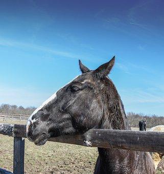 Wild Horse, Horses In Ranch, Horse In Farm, Wild, Ranch
