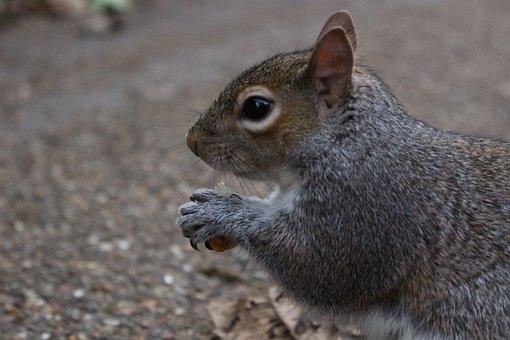 Squirrel, Nature, Park, Promenade, Animal, Forest