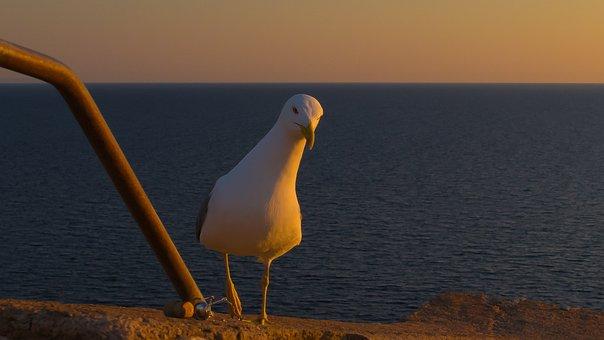 Seagull, Curious, View, Water Bird, Beach, Gull Species