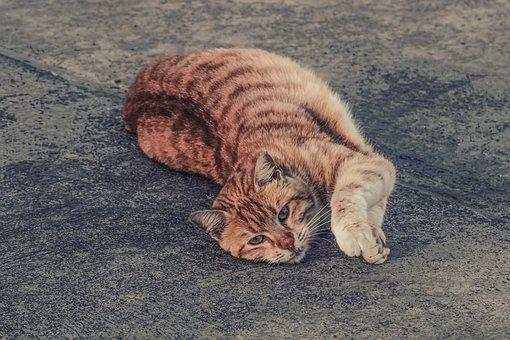 Cat, Stray, Tabby, Red, Naughty, Mincing, Animal