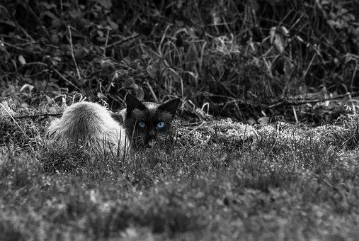 Cat, Animal, Pretobranco, Blue, Animal Portrait