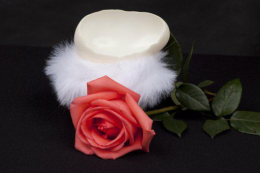 Rosa, Eggshell, Isolated, Feathers, Delicate