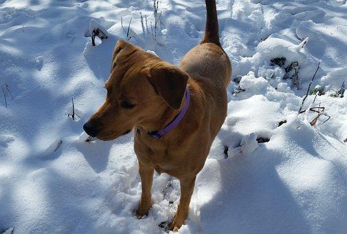 Dog, Snow, Fur, Cute, Pet, Happy, Breed, Canine, Season