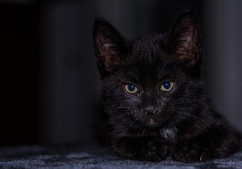 Baby Cat, Cat Baby, Kitten, Young Cat, Cat, Adidas