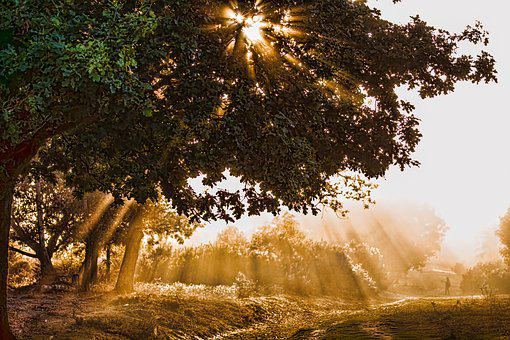 Sunlight, Rays, Sun, Landscape, Trees, Autumn, Light