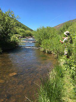 Stream, Fishing, Fly, River, Nature, Fisherman